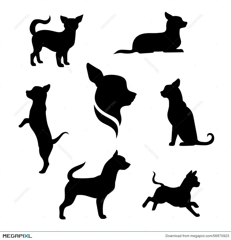 800x830 Chihuahua Dog Vector Silhouettes Illustration 56870923