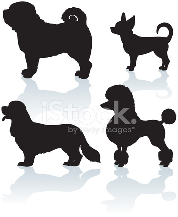 360x439 Dogs Miniature Amp Toy, Poodle, Pug, Chihuahua, King Charles Spa