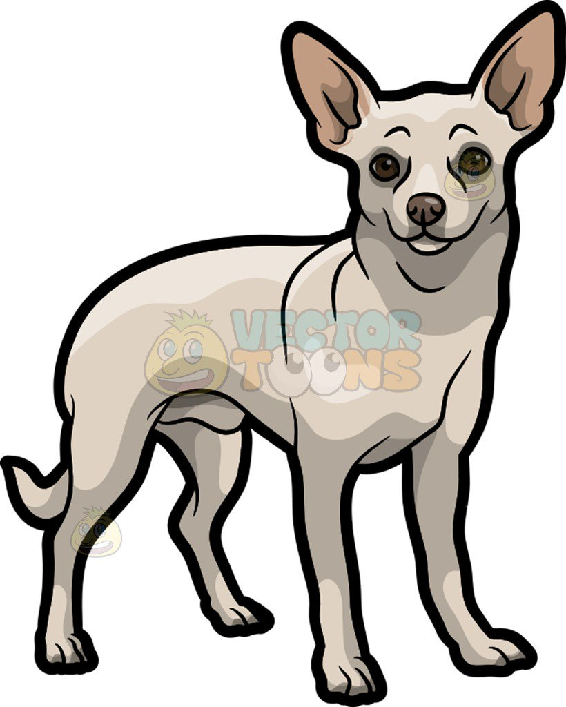 820x1024 Fresh Inspiration Chihuahua Clipart Angry Black And White Images