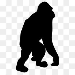 260x260 Orangutan Png And Psd Free Download