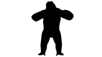 427x240 Search Photos Cute Chimp