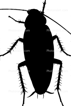 279x418 Cockroach Silhouette, Logo, Shape Images, Photography, Stock