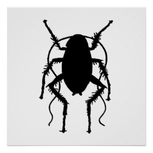 307x307 Cockroaches Posters Zazzle