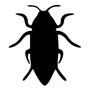 300x300 Cockroaches Decal Etsy