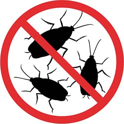 250x250 How To Get Rid Of Cockroaches Effectively Dengarden
