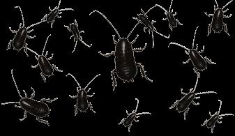 337x195 Las Vegas Cockroach Extermination Fischer's Pest Control
