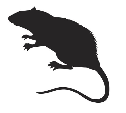 533x480 Rodent Droppings, Cockroaches, Lack Of Hot Water Lead To Closures