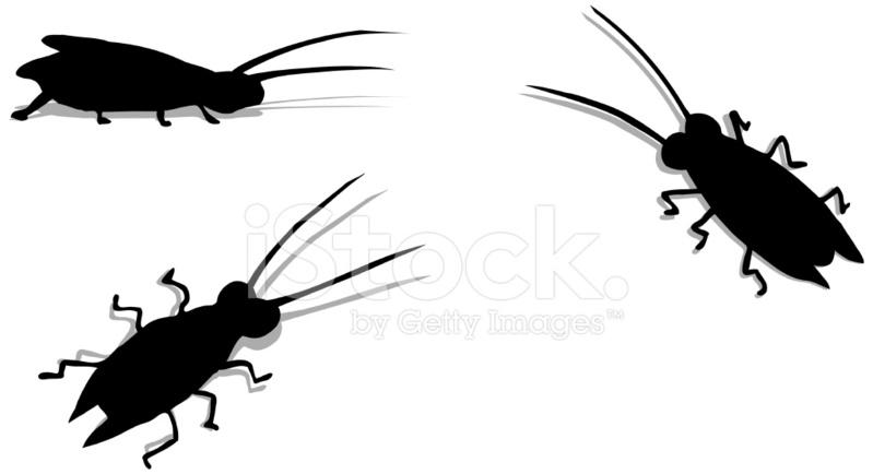 799x434 Black Cockroaches (Vector) Stock Vector
