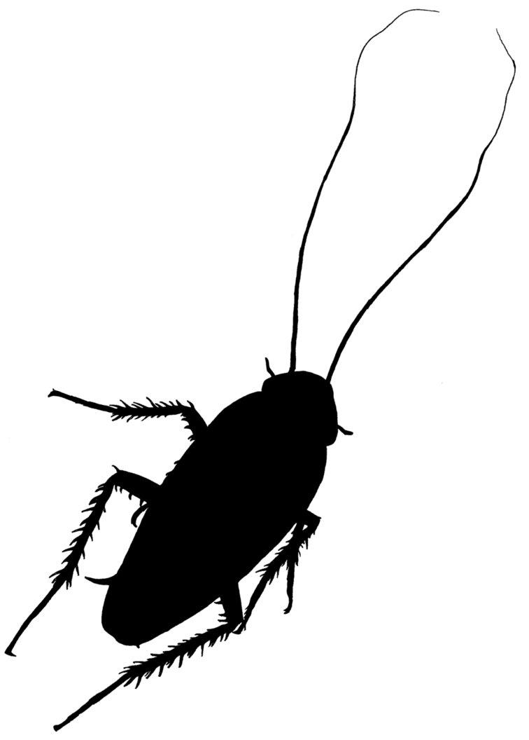 756x1056 Cockroach Silhouette By Zucco1