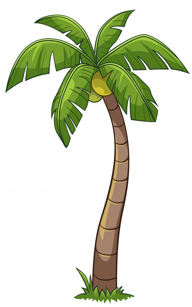 coconut tree silhouette vector at getdrawings com free for rh getdrawings com coconut tree clipart free coconut tree clipart vector
