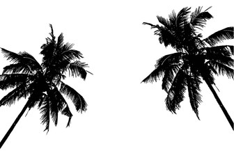 336x240 Realistic Silhouettetropical Coconut Palm Tree, Black Silhouettes