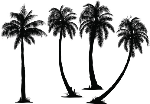 Coconut Tree Silhouette Vector At GetDrawings