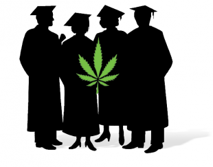 310x243 College Students May Do Better With Weed Alternet