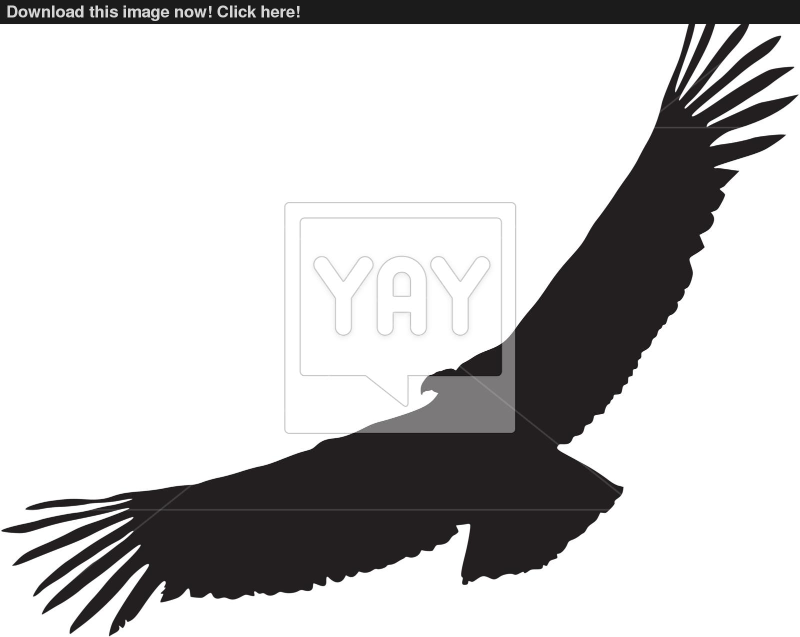 1600x1275 Illustration In Style Of Black Silhouette Of Condor Vector