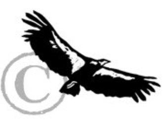 340x270 Print California Condor Food Web