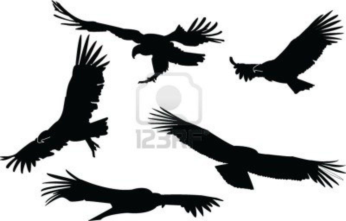 1200x768 Condors Tattoos Tattoo, Tatoo And Tatoos