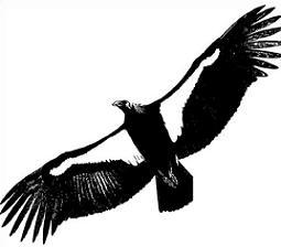 255x224 Condor Clipart