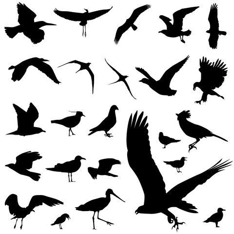 480x480 Bird Tattoo Hawk I Really Like Birds As Tattoos, Very Cool To See