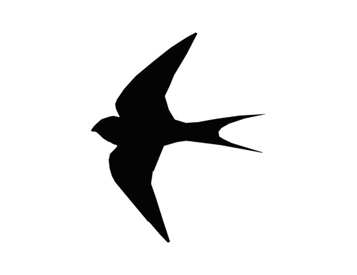 736x568 51 Best Tattoo Images On Swallows, Birds And Silhouettes