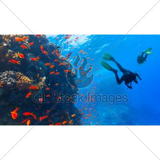 325x325 Scuba Diver Explore A Coral Reef Gl Stock Images