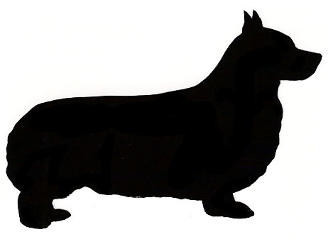 462x344 Norwich Terrier
