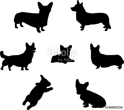 500x443 Pembroke Welsh Corgi Silhouette Stock Image And Royalty Free