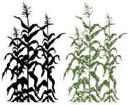 190x153 Halloween Corn Field Clipart
