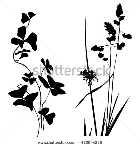 450x470 Black And White Plants Collection
