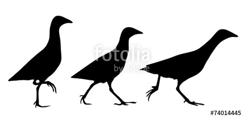 500x242 Corn Crake Silhouette Stock Image And Royalty Free Vector Files