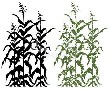 371x300 Corn Stalk Plants In Black And Green Grunge Vector Illustration