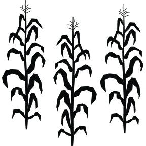 288x288 Corn Stalk Silhouette Vector