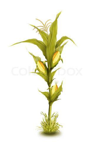 326x480 28 Best Walls Images On Corn Stalks, Boy Nurseries