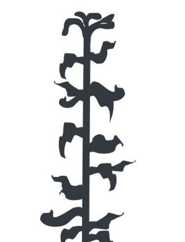 376x490 Corn Stalk Like Plant