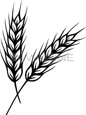 282x380 Barley Clipart Corn Stalk