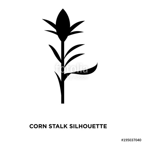 500x500 Corn Stalk Silhouette On White Background Stock Image And Royalty