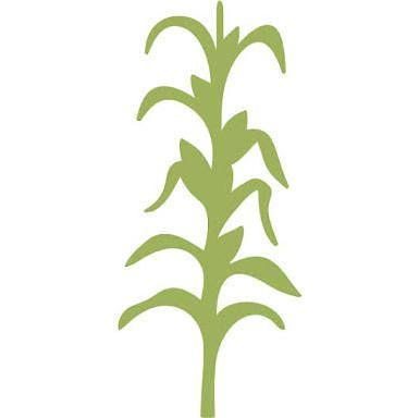 385x384 Corn Stalk Stencil Drawing