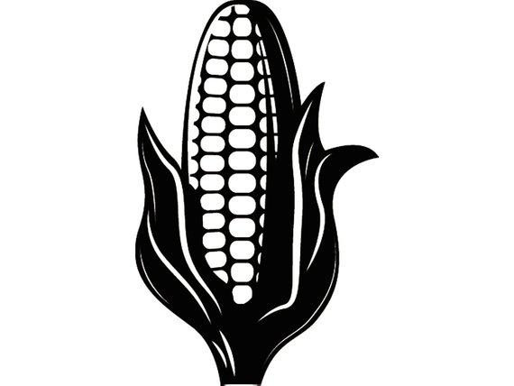 570x428 Corn Stalk 1 Ear Food Agriculture Vegetable Farm Cob