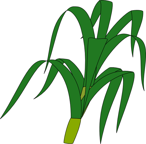 600x593 Corn Stalk Clip Art