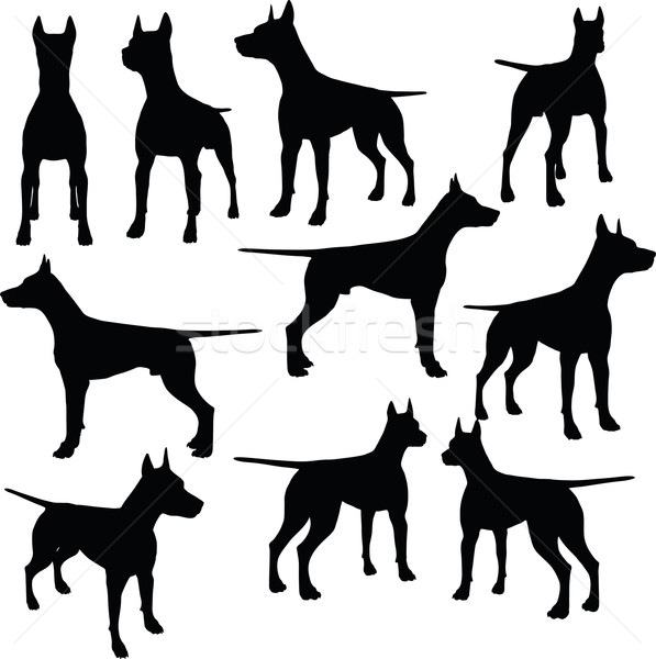 597x600 Dog Breeds Stock Photos, Stock Images And Vectors Stockfresh