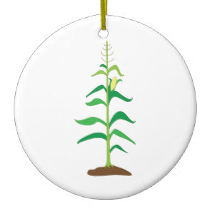 307x307 Corn Stalk Gifts On Zazzle