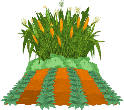 416x368 Corn Stalk Vectors Free Vector Download (120 Free Vector)