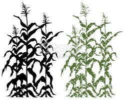 250x201 Corn Stalk Clipart
