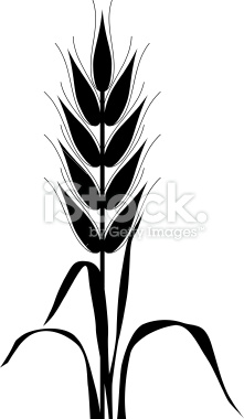 221x380 Corn Stalk Stencil Drawing