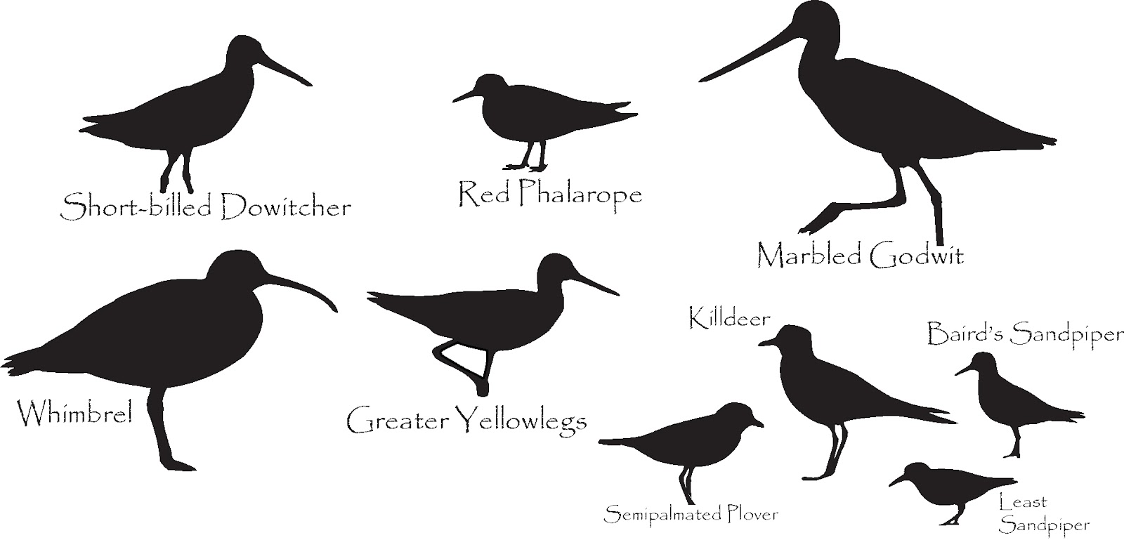 1600x769 List Of Synonyms And Antonyms Of The Word Sandpiper Silhouette