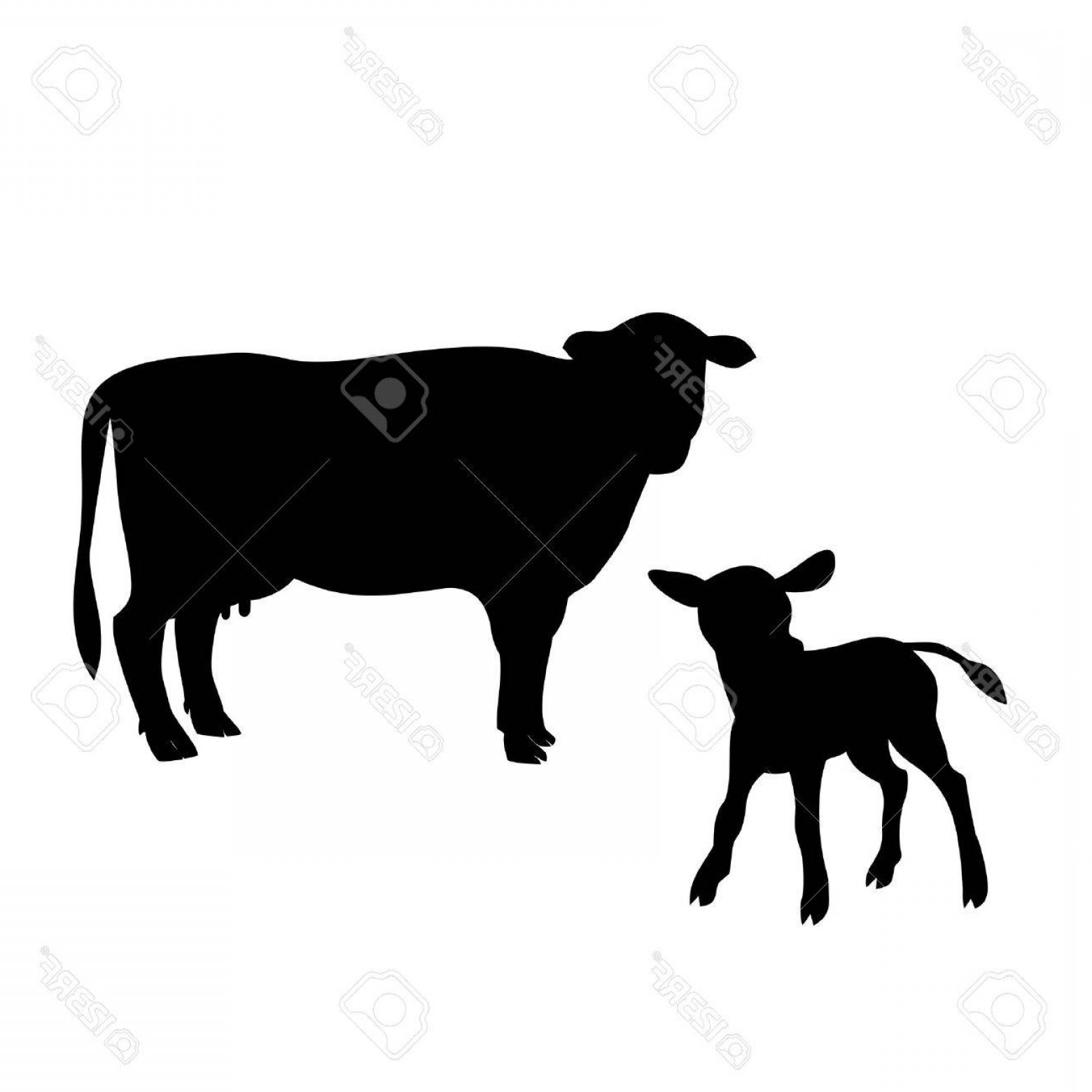 1560x1560 Calf And Cow Silhouette Vector Arenawp