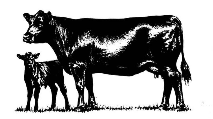 736x411 Cattle Silhouette Clip Art Clipart Collection