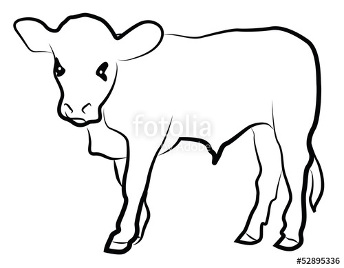 500x389 Calf Silhouette Isolated On White Stock Image And Royalty Free