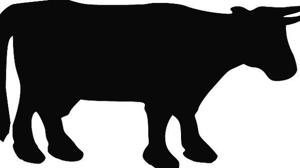 595x333 Cow, Intimidate, Cows, Silhouette, Outline, Cattle, Domestic