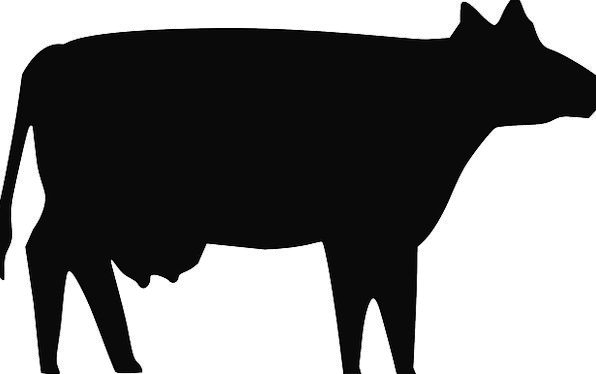 596x374 Cow, Intimidate, Outline, Animal, Physical, Silhouette, Domestic