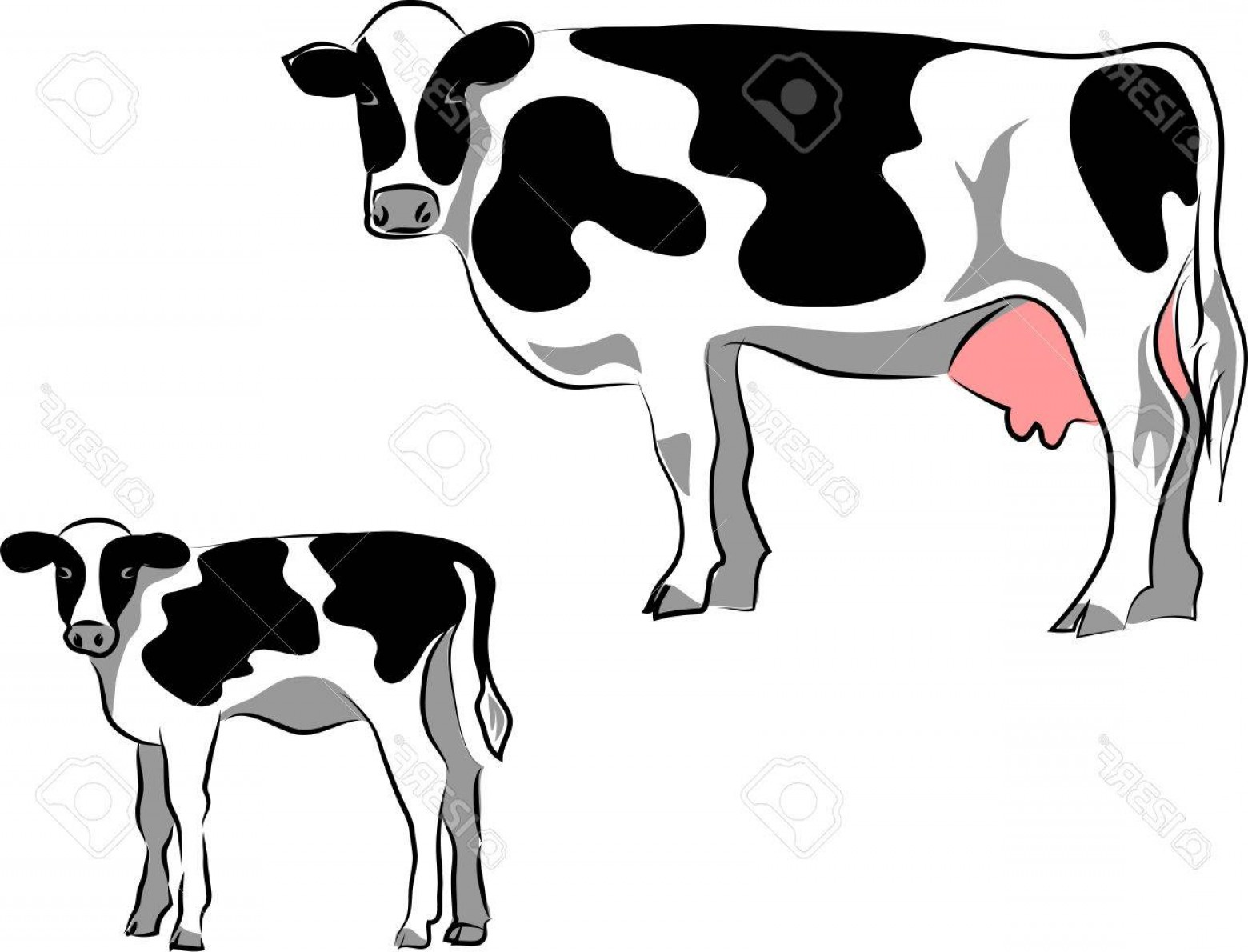 1560x1190 Calf And Cow Silhouette Vector Arenawp